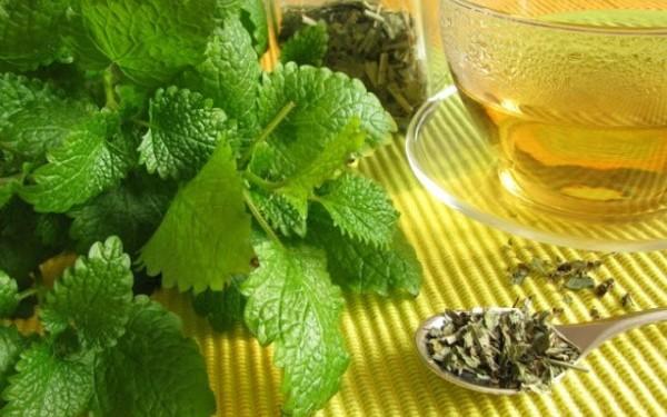 Η τσουκνίδα, φυτό για όλες τις ασθένειες.