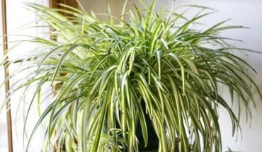 9 απίστευτα φυτά που καθαρίζουν τον αέρα καλύτερα από κάθε συσκευή που μπορεί να αγοράσετε.