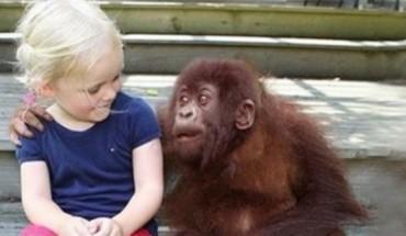 Πατέρας και κόρη συναντιούνται μετά από 12 χρόνια με τους αγαπημένους τους γορίλες