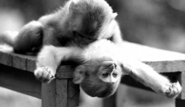 σύνδρομο της μαϊμούς, ερωτικό πρόβλημα