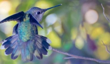 Μια λάτρης της φύσης απαθανατίζει την απίστευτη ομορφιά των πουλιών κολιμπρί