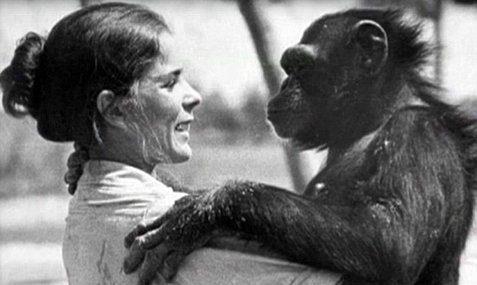 χιμπατζήδες ξανασμίγουν με την γυναίκα 2
