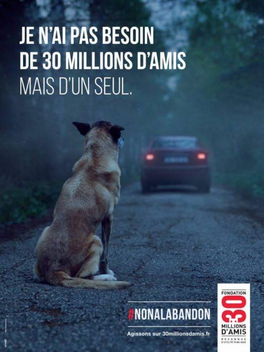 σκύλος του έσωσε τη ζωή 2