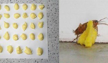 Διώξτε για Πάντα τις κατσαρίδες