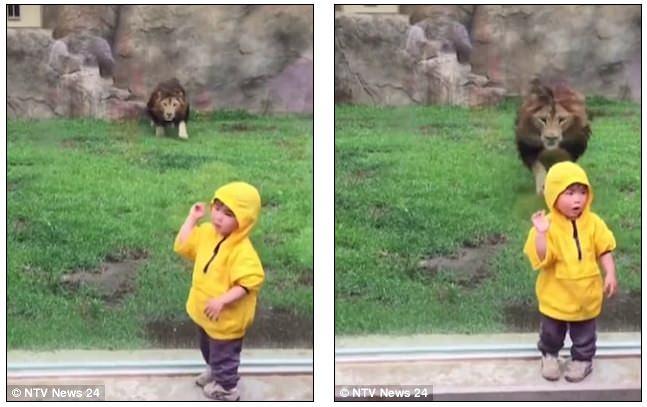 Λιοντάρι ορμάει
