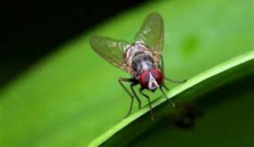 Διώξτε τις μύγες
