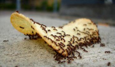 εξαφανίσετε τα μυρμήγκια