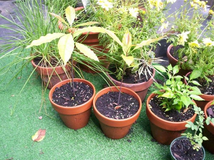 πότισμα των φυτών 2