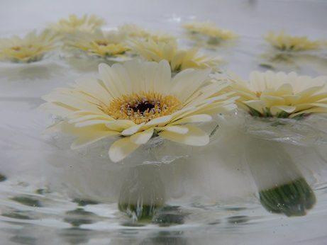φτιάξετε επιπλέουσες θήκες για λουλούδια 10