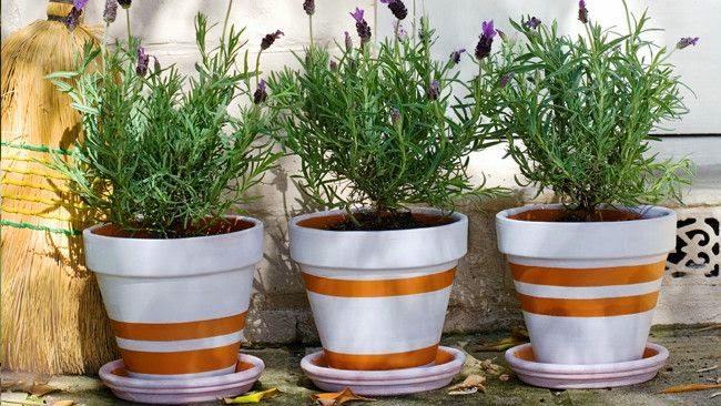 πότισμα των φυτών 1