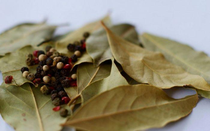 φύλλα δάφνης 2