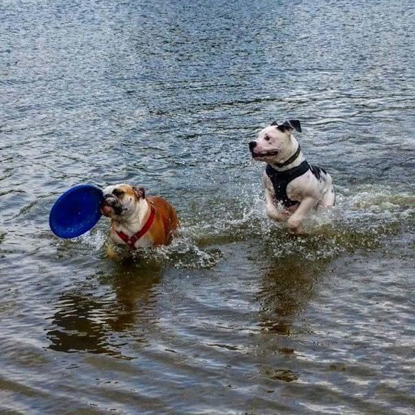 φωτογραφίες σκύλων 2