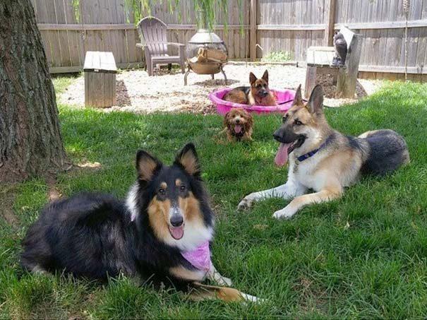 φωτογραφίες σκύλων 6