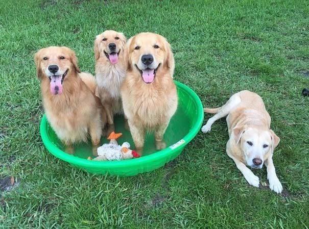 φωτογραφίες σκύλων 7