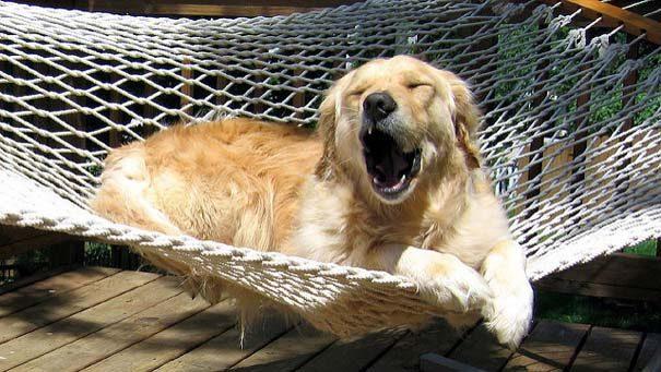 φωτογραφίες σκύλων 11