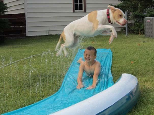 φωτογραφίες σκύλων 12