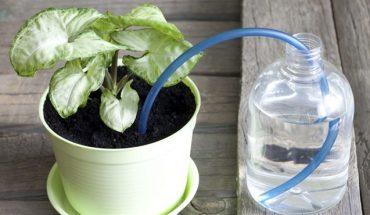 πότισμα των φυτών μας όσο είμαστε διακοπές