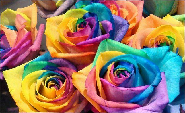 τριαντάφυλλα στα χρώματα του ουράνιου τόξου 5