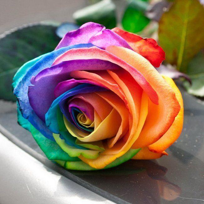 τριαντάφυλλα στα χρώματα του ουράνιου τόξου 10