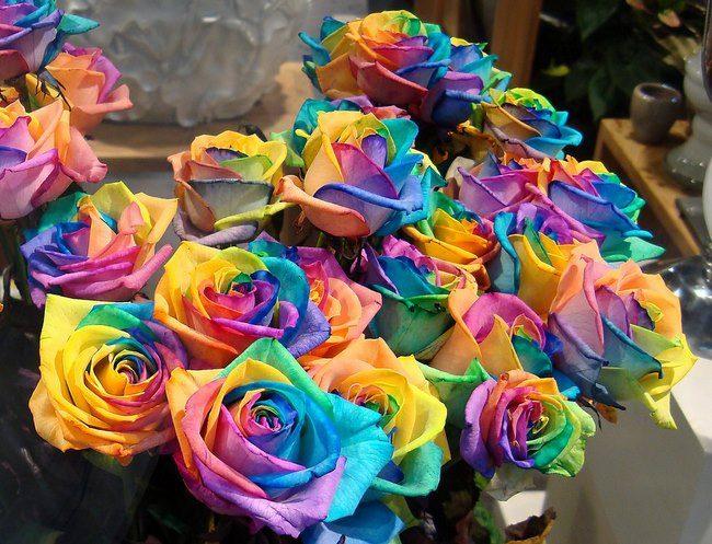τριαντάφυλλα στα χρώματα του ουράνιου τόξου 4