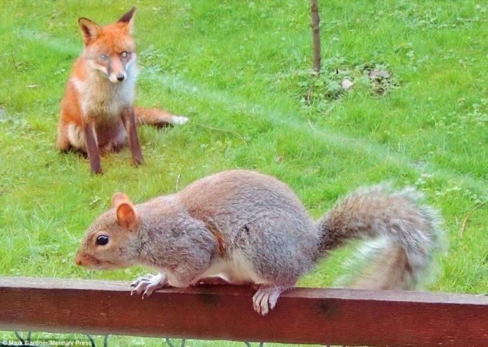 Σκίουρος χτυπάει το τζάμι 11
