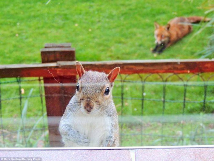 Σκίουρος χτυπάει το τζάμι 4