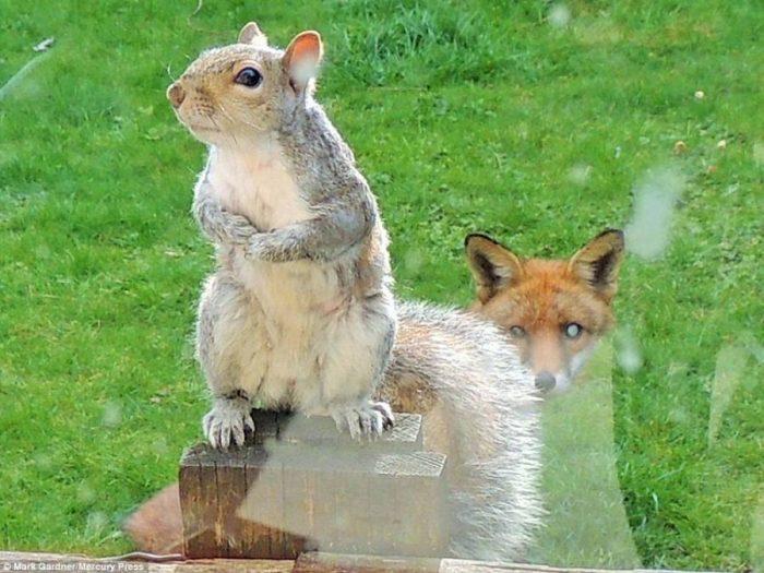 Σκίουρος χτυπάει το τζάμι 5