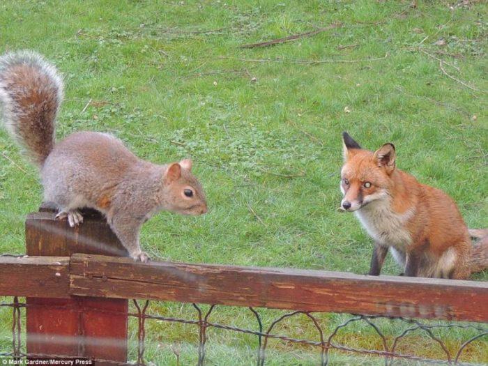Σκίουρος χτυπάει το τζάμι 6