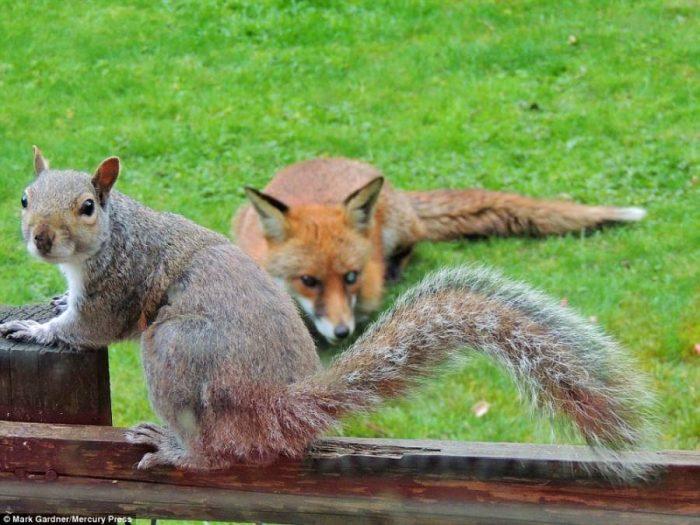 Σκίουρος χτυπάει το τζάμι 7