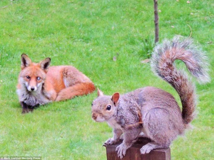 Σκίουρος χτυπάει το τζάμι 8
