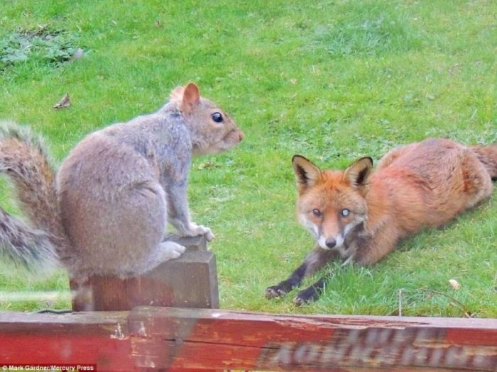 Σκίουρος χτυπάει το τζάμι 9