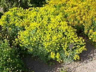 φυτό που διώχνει τη γρουσουζιά 2