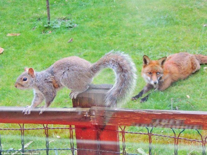 Σκίουρος χτυπάει το τζάμι 10