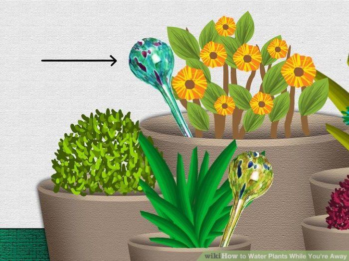 πότισμα των φυτών, όταν λείπεις 2