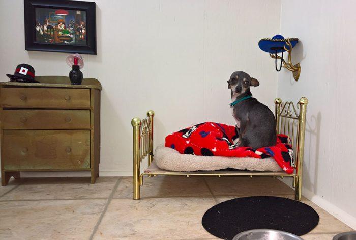 Έχτισε ένα δωμάτιo για το σκυλάκι της κάτω από τις σκάλες. 3