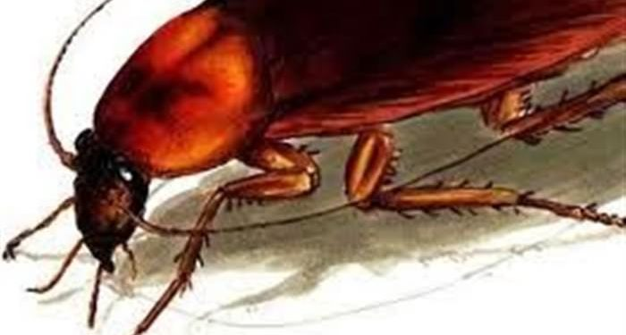 Βάλε... αγγούρι στη κατσαρίδα και θα δεις 1