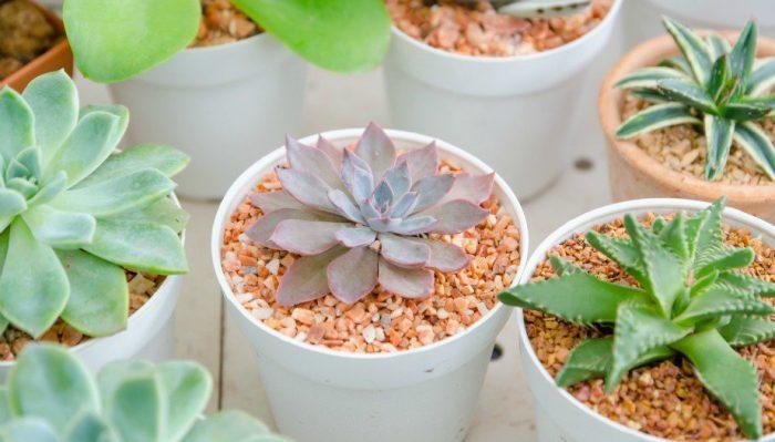 Αυτά Είναι τα Φυτά που δεν Θέλουν Καθόλου Πότισμα! 2