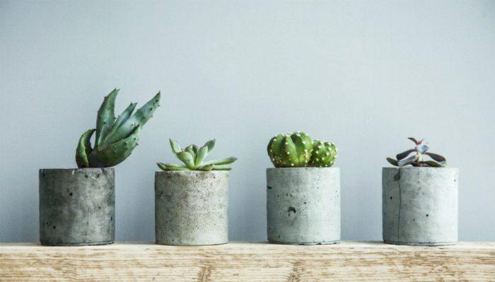 Αυτά Είναι τα Φυτά που δεν Θέλουν Καθόλου Πότισμα! 4