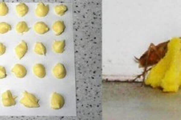 Εξουδετερώστε τις κατσαρίδες μια για πάντα 3