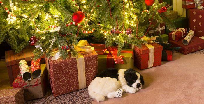 Τέλειο Χριστουγεννιάτικο Δέντρο σε 10 Βήματα! 4